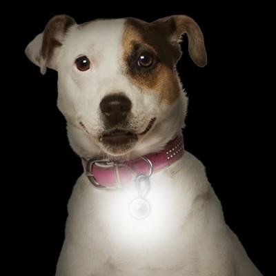 NiteIze PetLit LED Collar Ornament